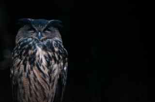 The eagle owl symbol of the Reserve_picture of Marco Giordano